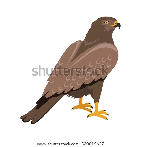Shutterstock Hawk vector. Predatory birds wildlife concept in flat style design. World fauna illustration for prints, posters, childrens books illustrating. Beautiful hawk seating on brunch isolated on white.