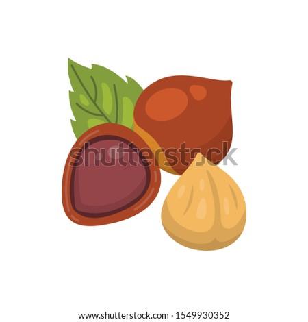 Hazelnut vector icon nuts in cartoon style. Hazel Nut food collection. Foto d'archivio ©