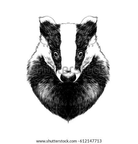 head badger symmetric  sketch