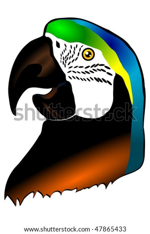 Head of a parrot of Ara isolated on the white background