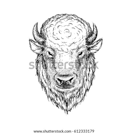 head of buffalo.Face of bison,bull.Graphic sketch hand drawn vector illustration.Ink drawn