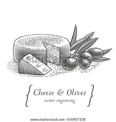Head of cheese with triangle piece of cheese and olives with olive branch. Hand drawn engraving style illustrations.