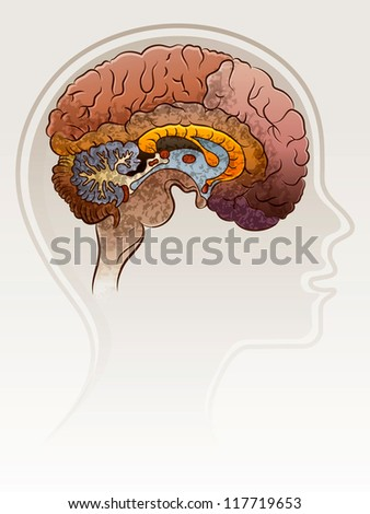 Head of the person with a brain.