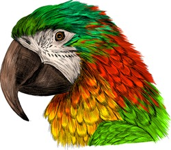 head parrot macaw yellow red green