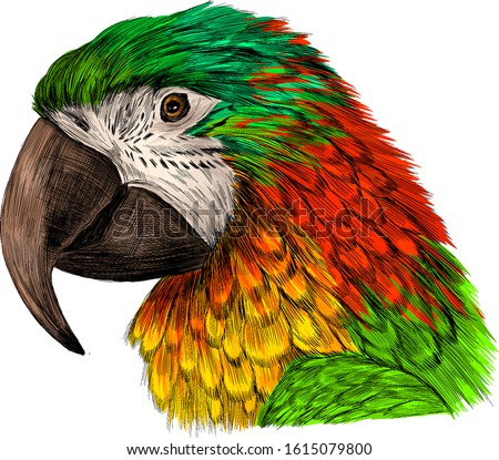 head parrot macaw yellow red