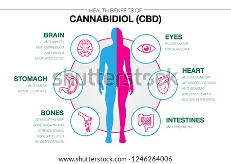 Health benefits of Cannabidiol CBD from cannabis or hemp or marijuana effect on human body. vector infographic on white background.