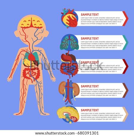 Human Organs Icons - Download Free Vector Art, Stock Graphics & Images