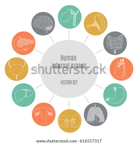 health round icons set  vector