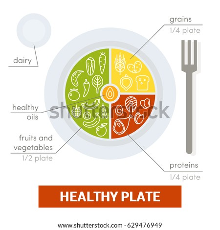 Healthy plate concept. Vector illustration of balanced meal
