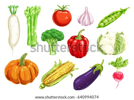 Healthy watercolor drawing vegetables. Pepper and tomato, garlic, broccoli and radish, corn, eggplant and pumpkin, pea, asparagus, cauliflower and daikon veggies for farming design #640994074