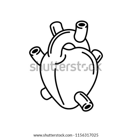 Heart Anatomy organ linear style isolated. Vector illustration