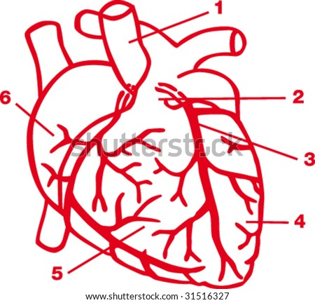 Quemirudga Heart Diagram For Kids