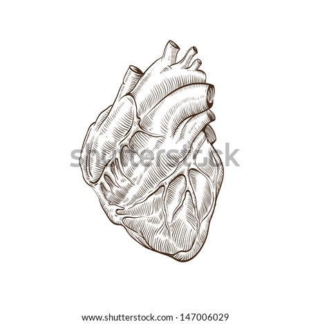 heart hand drawn isolated on a