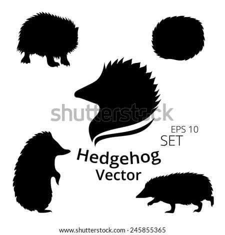hedgehog set  vector  eps 10