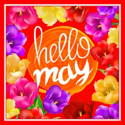 Hello may hand Lettering with tulip flower. Vector illustration EPS10 art