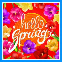 Hello Spring. Vector illustration with bright colorful tulips. A circle orange sun. post card. hand Lettering. red background