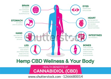 Hemp CBD Wellness and your body. Health benefits of Cannabidiol CBD from cannabis, hemp, marijuana effect on body. vector infographic on white background.