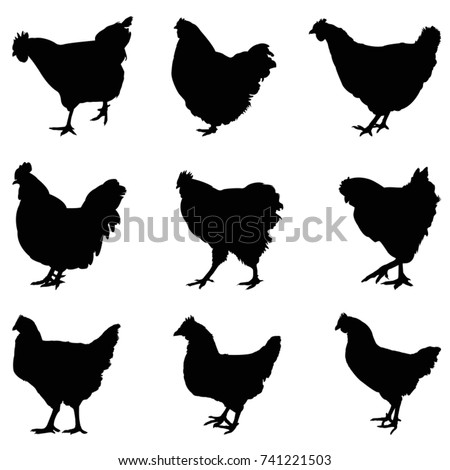 Hen silhouette set, vector illustration
