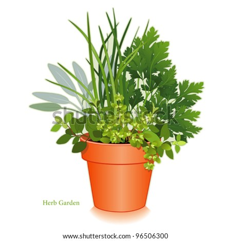 Herb garden clay flowerpot planter for cooking italian oregano garden sage chives italian - Aromatic herbs pots multiple benefits ...