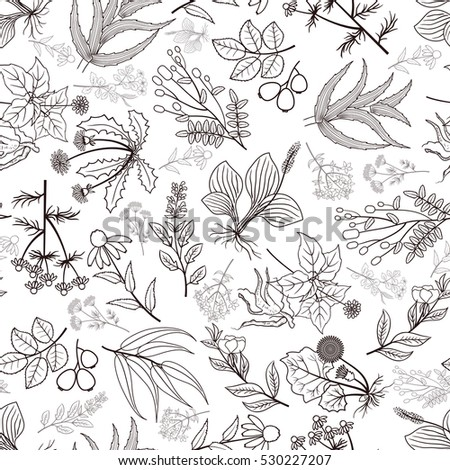 herb plants background vector