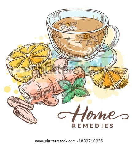Herbal tea with chamomile, lemon, ginger and mint. Home remedies treatment and medicines for colds, flu, coughs. Vector hand drawn watercolor sketch illustration. Healthcare natural herbal therapy Stockfoto ©