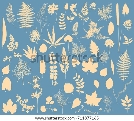 herbarium   vector collection