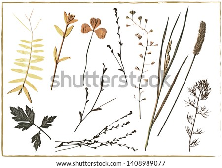 Herbarium vector. Dried herbs, grass and twigs, natural field plants, floral decorative elements, isolated on white background: wheat, clover, chamomile and pea leaves, flower branches, shepherd's bag