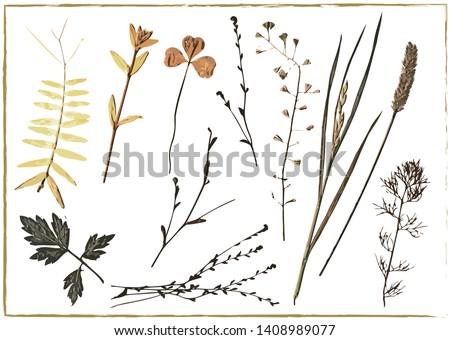 herbarium vector dried herbs