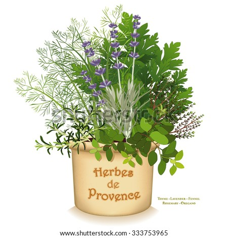Herbes de provence garden planter aromatic cooking herbs of sw france rosemary sweet fennel - Aromatic herbs pots multiple benefits ...