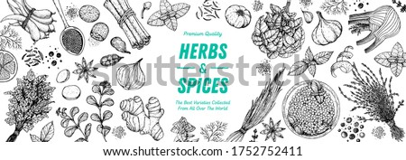 Herbs and spices hand drawn vector illustration. Hand drawn food sketch. Vintage illustration. Aromatic plants. Card design. Sketch style. Spice and herbs black and white design