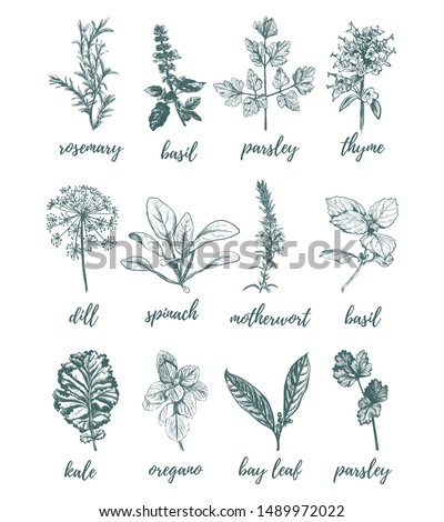 Herbs and spices vector illustration. Herbs and spices collection. Set of herbs and spices sketch hand drawing.