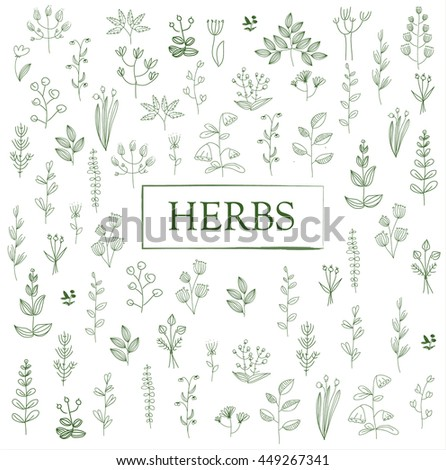 Herbs and twigs set. Vector illustration freehand drawing. pattern #449267341