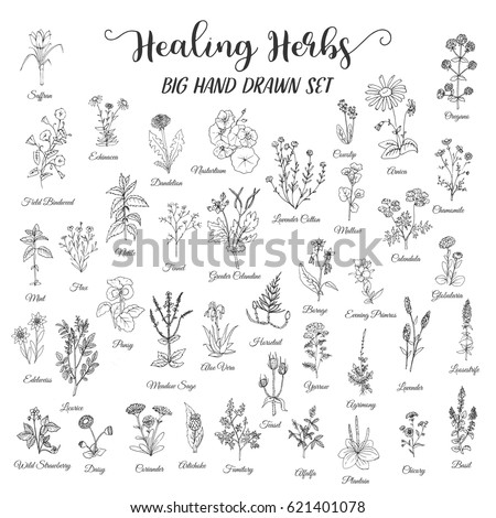 herbs and wild flowers