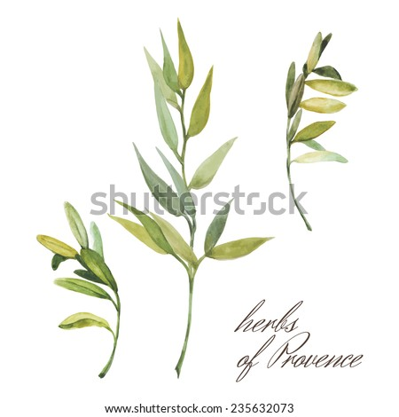 herbs of provence on white