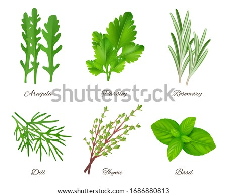 Herbs realistic. Green food species aromatic product ingredients parsley rosemary sage onion vector collection