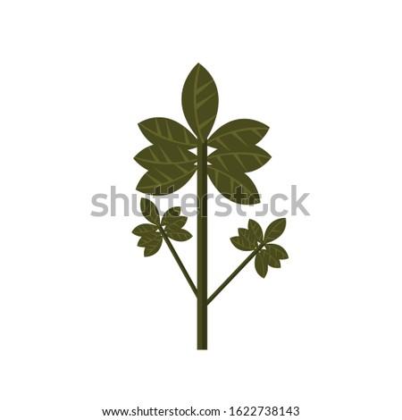 Herbs simple herbs 12 Illustration Cilp Art vector