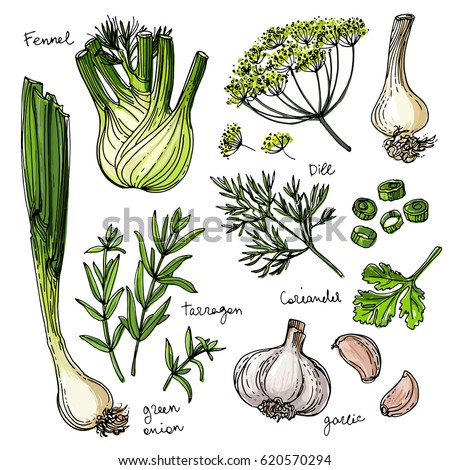 herbs spices herb drawn black