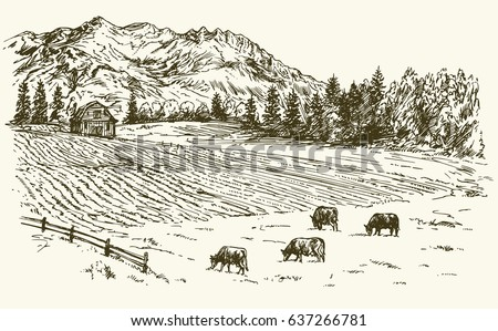 herd of cows grazing on meadow