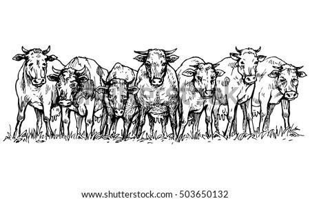 herd of cows in a meadow  ...