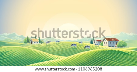 Herd of cows  in summer rural landscape at dawn among fields and pastures. Vector illustration.