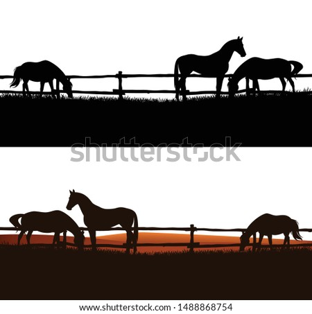 herd of domestic horses grazing