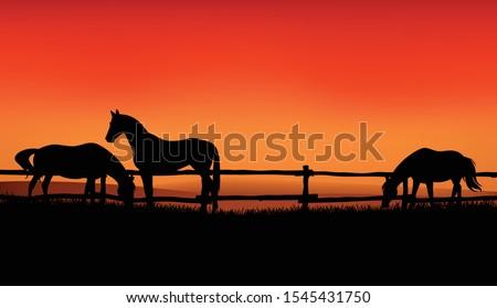 herd of farm horses grazing at