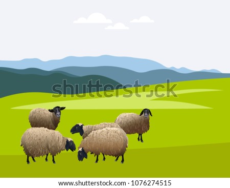 herd of sheep on green pasture