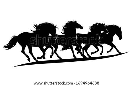 herd of wild mustang horses