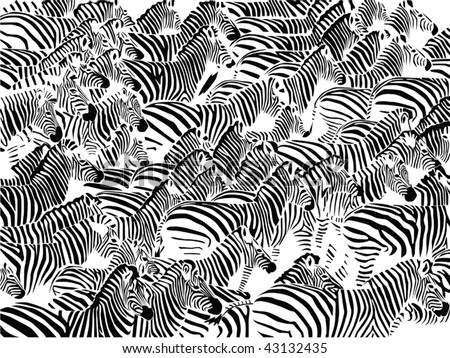 Herd of zebras vector
