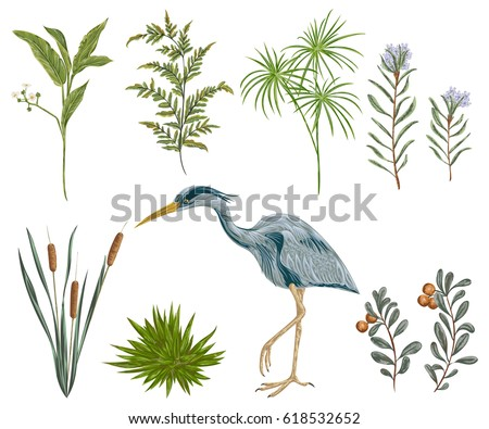 heron bird and swamp plants