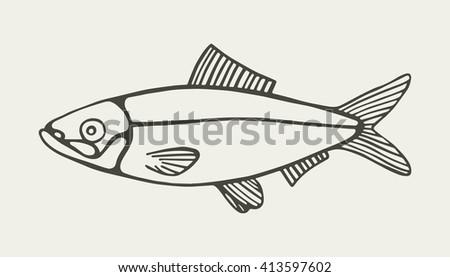 herring marine food fish