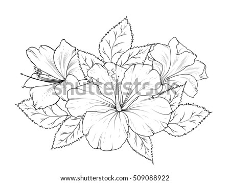 Black and white flowers download free vector art stock graphics hibiscus and lily flowers bouquet garland composition isolated black and white detailed vector design sketch mightylinksfo