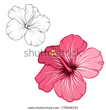 Hibiscus beautiful blooming flower isolated on white background. Closeup macro detailed view. Color black white outline sketch drawing set. Exotic tropical spring summer botanical vector design.