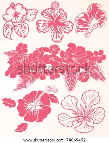 Hibiscus Collection